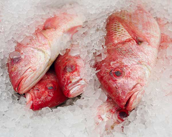 Women's Health Magazine Shares My Story on The Scary Fish Poisoning You Don't Know About
